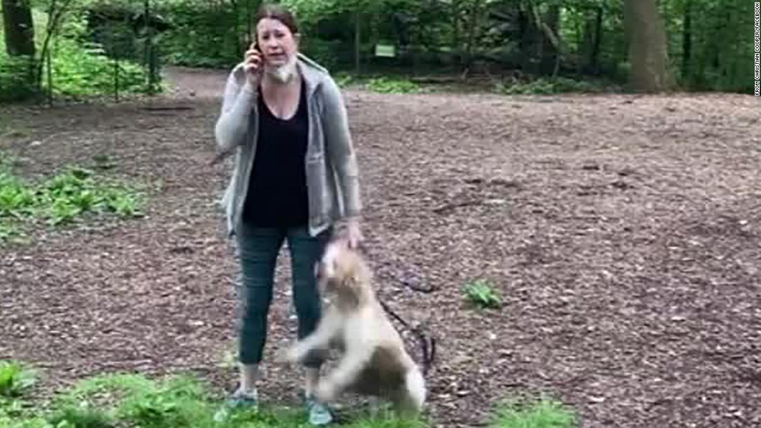 Amy Cooper: Il cane è tornato con una donna bianca che ha chiamato la polizia a guardare gli uccelli neri a Central Park
