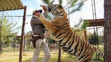 Secondo quanto riferito, Tiger King Joe Exotic aveva più di 200 grandi felini nel suo zoo in Oklahoma.